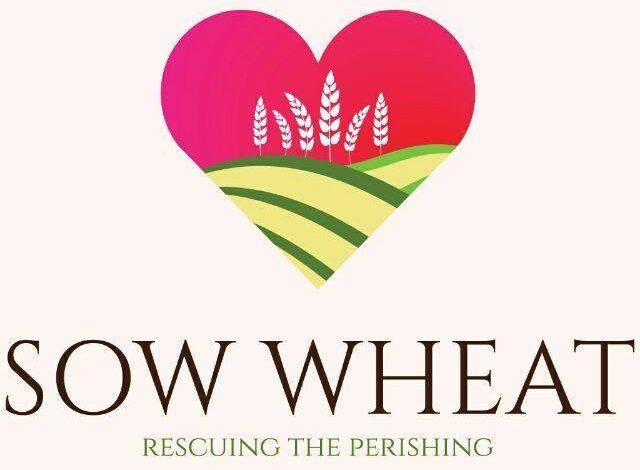 Sow Wheat International